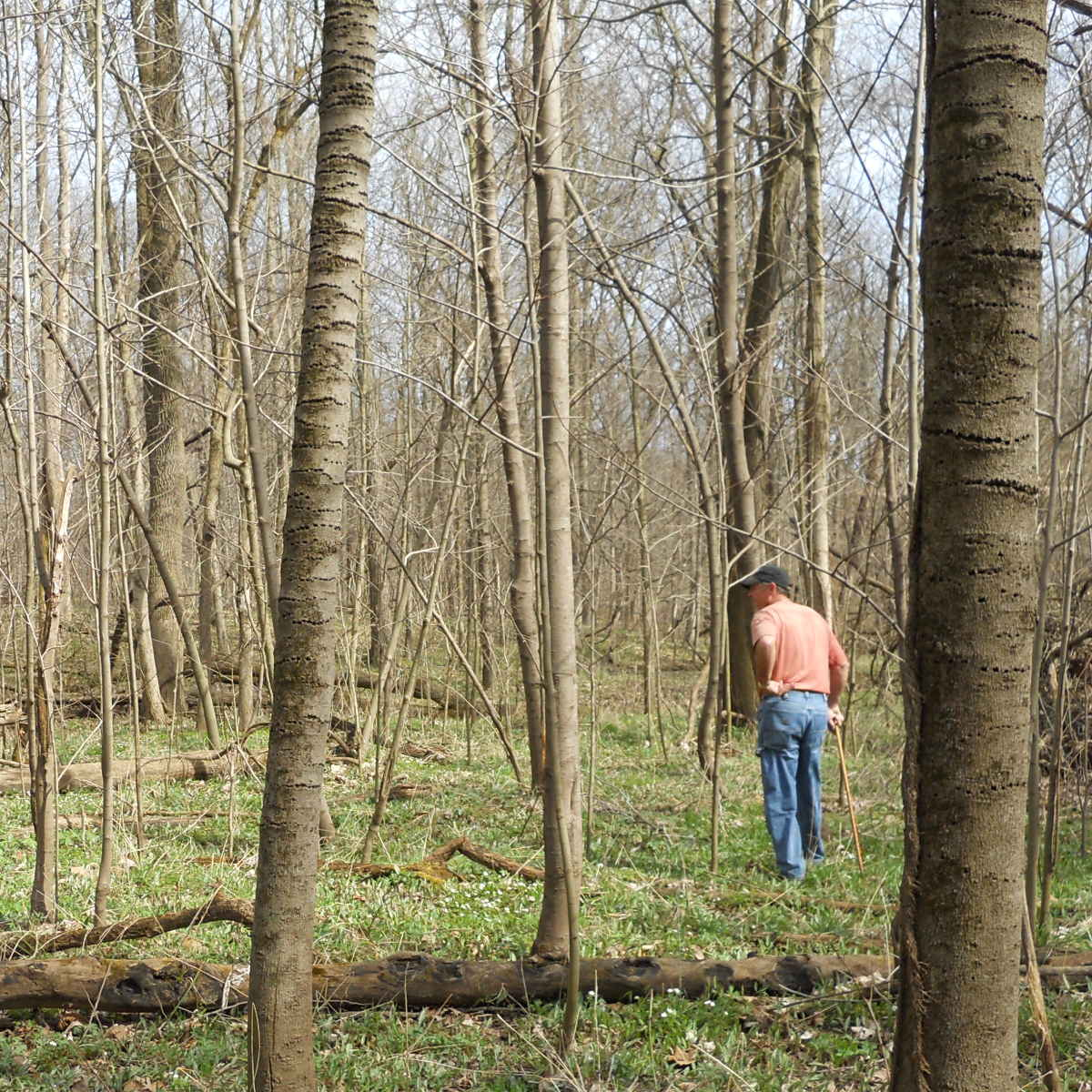 Illinois forester assessing and inventorying forest