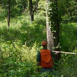 Illinois Consulting Forester conducting timber inventory and appraisal